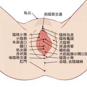 女性器説明画像